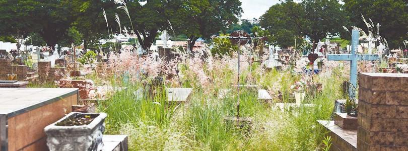 DENGUE: Cemitérios são alvos de críticas
