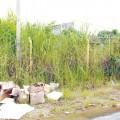 TERRENO SUJO: Prefeitura notifica 2.998 proprietários