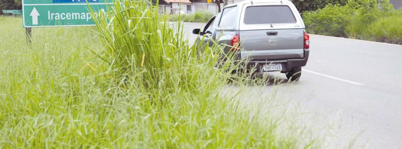 Limeira-Iracemápolis: Falta de poda faz população cortar mato alto