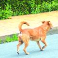 ABANDONOS DE ANIMAIS: Denúncias podem chegar a 50 por semana