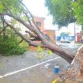 TEMPORAL: Chuva e vento forte causam estragos