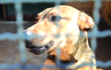 EM UNIVERSIDADES: Aprovada lei que proíbe uso de animais