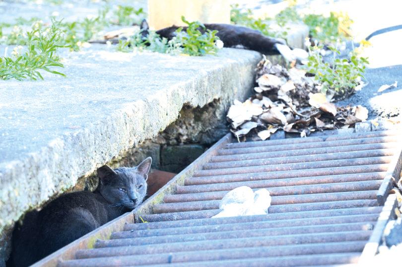 JARDIM SANTA LÚCIA: Matança de gatos é denunciada