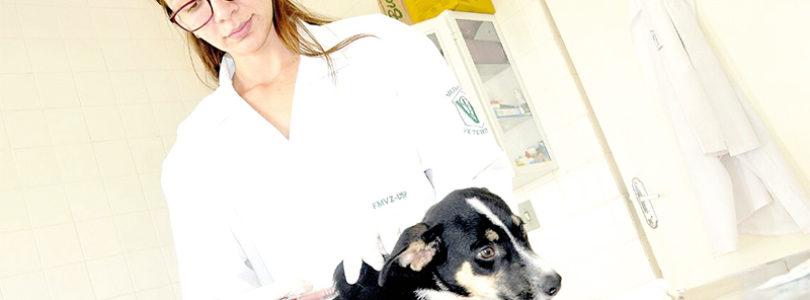 Cães e gatos: município tem 13.045 com microchips