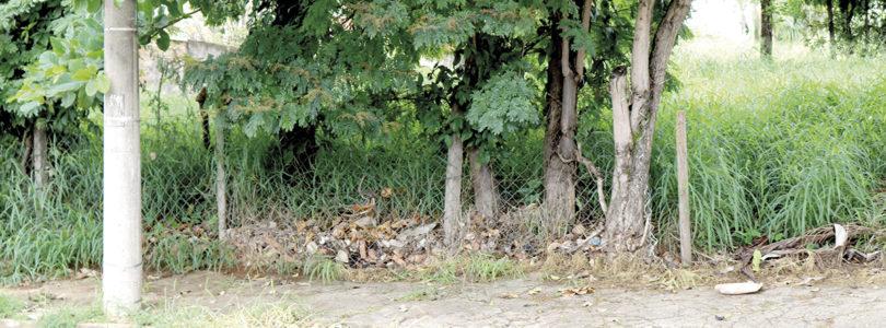 ATÉ OUTUBRO: Cidade registra 520 casos com escorpiões